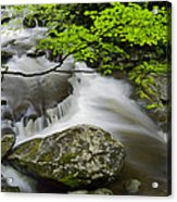 Tremont Spring In Great Smoky Mountains Acrylic Print