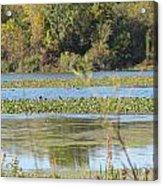 Tri-ply Swamp Acrylic Print