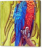 Tribal Macaw Acrylic Print by Diana Shively