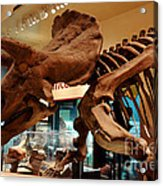 Triceratops At The Smithsonian Acrylic Print