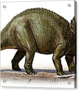 Triceratops Prorsus, A Prehistoric Era Acrylic Print