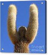Trichoreus Cactus Square Acrylic Print