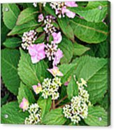 Trickles Of Color Acrylic Print