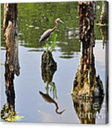 Tricolored Reflection Acrylic Print