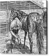 Trim And Fit - Farrier With Horse Art Print Acrylic Print
