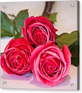 Trio Of Pink Roses Acrylic Print