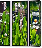 Triptych Of Water Hyacinth Acrylic Print