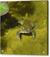 Troll's Toad Acrylic Print