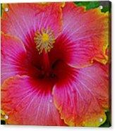 Tropical Beauty Acrylic Print