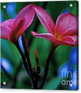 Tropical Colour Acrylic Print