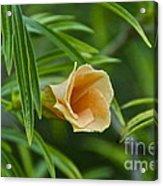 Tropical Flora Acrylic Print