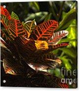 Tropical Leaves Acrylic Print