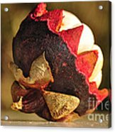 Tropical Mangosteen - The Medicinal Fruit Acrylic Print by Kaye Menner