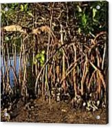 Tropical Mangroves Acrylic Print