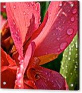 Tropical Rose Canna Lily Acrylic Print