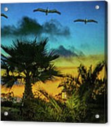 Tropical Sunset With Pelicans Acrylic Print
