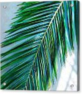 Tropical Acrylic Print