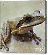 Tropical Tree Frog II Acrylic Print