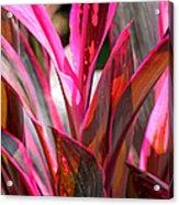Tropical Vision II Acrylic Print