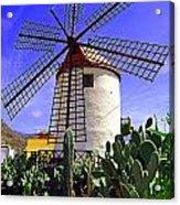 Tropical Windmill Acrylic Print