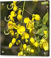 Tropical Yellow Flowers Acrylic Print