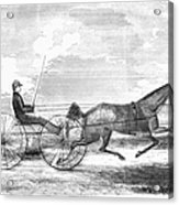 Trotting Horse, 1853 Acrylic Print