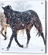 Trotting In The Snow Acrylic Print