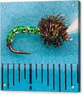 Trout Fly Suspender Buzzer Acrylic Print
