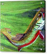 Trout On - Pastel Painting Acrylic Print