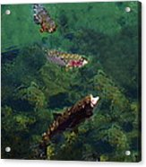 Trout Rising To Feed Acrylic Print