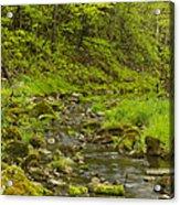 Trout Run Creek 4 Acrylic Print