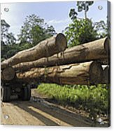 Truck With Timber From A Logging Area Acrylic Print