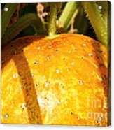 True Lemon Cucumber Acrylic Print