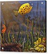 Trunkfish And Anemone Fish Acrylic Print