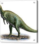 Tsintaosaurus Spinorhinus Acrylic Print