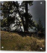 Tubbs Hill On Lake Cd'a Acrylic Print