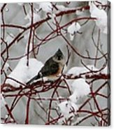 Tuft Winter Acrylic Print