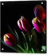 Tulip Dream Acrylic Print