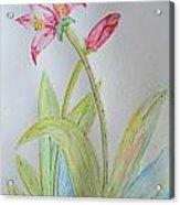 Tulip Duo II Acrylic Print