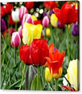 Tulip Garden University Of Pittsburgh  Acrylic Print