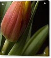 Tulip On Black Acrylic Print by Al Hurley