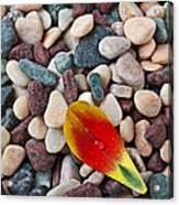 Tulip Petal And Wet Stones Acrylic Print