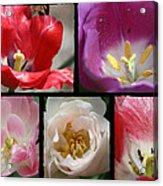 Tulip Sampler Acrylic Print