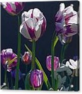 Tulip Springtime Memories Acrylic Print