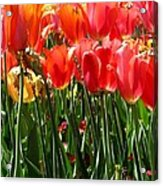 Tulip Uprising Acrylic Print