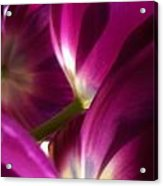 Tulip Weave Acrylic Print