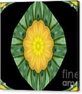Tulips 2 Acrylic Print