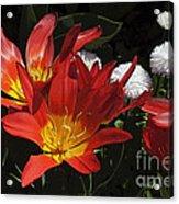 Tulips And Daisies Acrylic Print