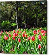 Tulips And Woods Acrylic Print