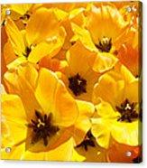 Tulips Art Prints Yellow Tulip Flowers Floral Acrylic Print